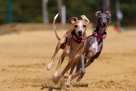 Tile image: greyhound facilities