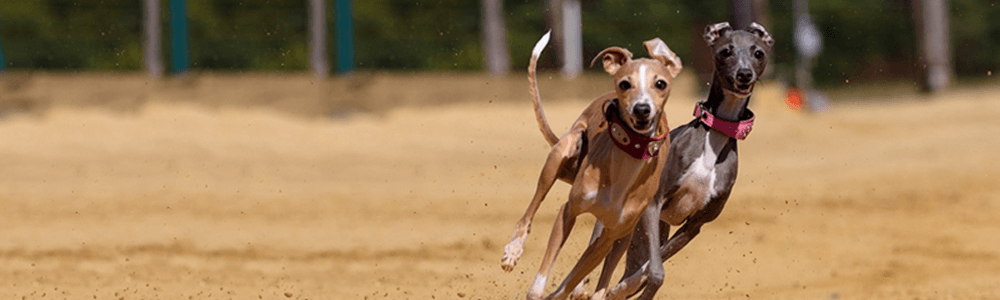 Banner image: Greyhound Facilities